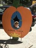 Image for Lemos Farm Pumpkin - Half Moon Bay, CA