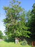 Image for Atlanta, Michigan Shoe Tree