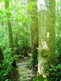 Image for Appalachian Trail - Spivey Creek Gap