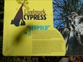 Image for Leopold Tree - Corkscrew Swamp Preserve, Naples, Florida USA