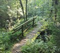 Image for Footbridge in the Forest - Wallbach, AG, Switzerland