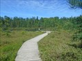 Image for Sifton Bog Boardwalk - London, Ontario