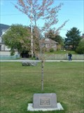 Image for Cherry Tree - Sitka, AK