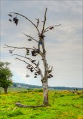 Image for Shoe Tree Derry's Corner - Harver NB