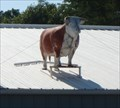 Image for Cow on Sweeney's roof - Apalachin, NY