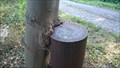 Image for Maple tree sneaking up a bollard - Wesseling, NRW, Germany