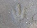 Image for Wisteriahurst Walkways Dinosaur Footprints - Holyoke, MA