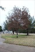 Image for Helga Graham Memorial Oak - Memorial Park - Strawn, TX