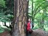 Nejvíce jsme obdivovali nádherné stromy.