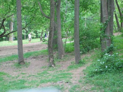 Looking toward tee #4.  The forest trees provide a challenge.