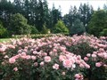 Image for Rose Garden in Queenstown Gardens - Queenstown, New Zealand