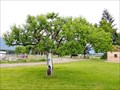 Image for Wolf River Apple Tree - St. Mary's Mission Historic District - Stevensville, MT