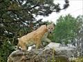 Image for Cougar - Osoyoos, British Columbia