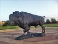 Image for American Bison - Abilene, TX