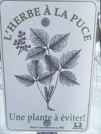 Photo gros plan sur le panneau image de la plante a éviter.  Photo close up of the panel image of the plant to avoid.