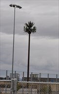 Image for Palm Tree Cell Tower