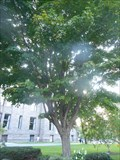Image for Billionth Seedling Tree - Queen's Park, Toronto, ON