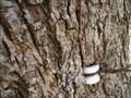 Image for Omnivorous Tree - Ferguson Township, Pennsylvania