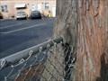 Image for Devoured Metal Fence - Woodlynne, NJ