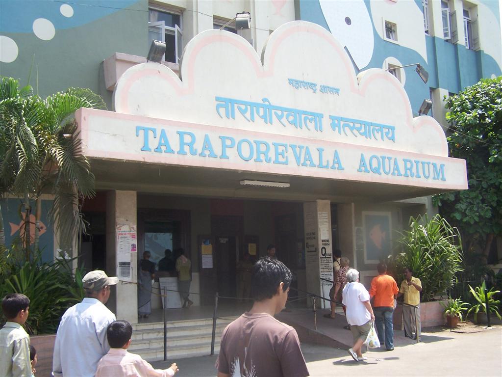 Fish aquarium tarapur - Fish Aquarium Tarapur