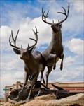Image for Deer - Parker, CO