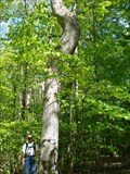 Image for Letchworth-Genesee River Bend Tree