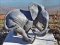 Image for Baby Elephant - Waco, TX