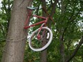 Image for Bicycle eating tree - Lisbon, Ohio