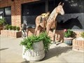 Image for Horse and Colt - Madisonville, TX