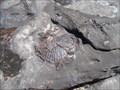 Image for Berrara Cove Fossil Beds - Berrara, NSW