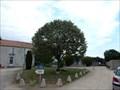 Image for Tilleul Arbre de la Liberte - Saint Avaugourd des Landes,France