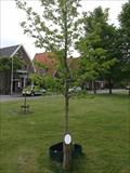 Image for 10Yrs Olst-Wijhe - Olst, NL