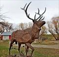 Image for Bull Elk - Drummond, Montana