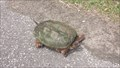 Image for Turtle Crossing - Presque Isle - Erie, Pa