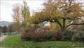Image for Penticton Rose Garden - Penticton, British Columbia
