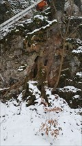 Image for Tree with a Face - Büsserach, SO, Switzerland