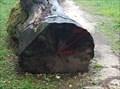 Image for Tree Growth Rings - Arlesheim, BL, Switzerland