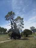 Image for Herbig Family Tree, Mount Pleasant Rd, Springton, SA, Australia