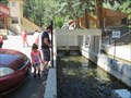 Image for Feed the Fish - Glenwood Springs Hatchery - Glenwood Springs, CO