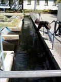 Image for Kern River Fish Hatchery- Kernville, CA, USA