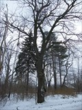 Image for Shoe Tree - Chesterland, Ohio