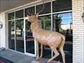 Image for Elk - Fort Worth, Texas
