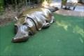 Image for Hippopotamus  -  San Diego, CA