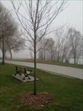 Image for Lisa Packebush Tree - Toronto, ON