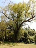 Image for Black-Bowie Black Walnut Trees - Historic Washington State Park, Washington, AR