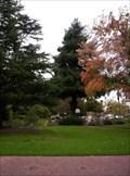Image for Monterey Moon Tree