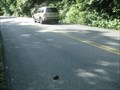 Image for Congaree National Park Turtle Crossing