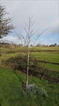 Image for Ricenda Lord - St Margaret - Hunningham, Warwickshire