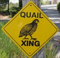 Image for Quail Crossing - Los Altos, CA