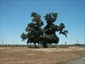 Image for Cork Shortage Seedling - Chandler, Arizona